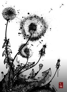 Black and white dandelion drawing