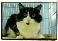 Gepetto - DLH - Black and White - Playful boy who loves laptime and light conversation!
