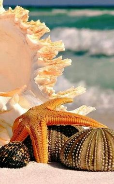 Beautiful shells...love their colors.