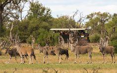 Elephant Express at Hwange, Zimbabwe