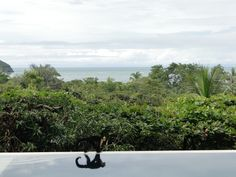 looking across the jungle canopy from the pool in Manuel Antonio, CR