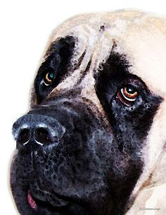 Mastiff Dog Art - Sad Eyes Painting by Sharon Cummings - Mastiff Dog Art - Sad Eyes Fine Art Prints and Posters for Sale