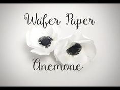 Wafer Paper Anemone - YouTube