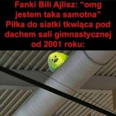 Polish Memes, Discord, Haha, Funny Memes, Humor, Pug, Ha Ha, Humour, Funny Photos