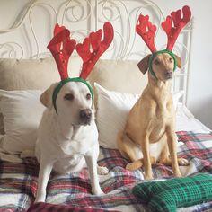 mibarquitodepalet: Decoración de Navidad