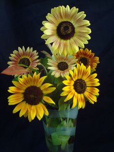 I like the multi-colored sunflowers too...though we will have a lot of yellow ones