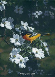 """Spring Arrival"""