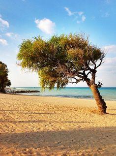Beach Tree. Goderich, Ontario, Canada #Goderich #RediscoverGoderich #GoderichBeaches