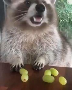 Cute Little Animals, Cute Funny Animals, Cute Cats, Funny Monkeys, Cute Animal Videos, Funny Animal Pictures, Sports Pictures, Cute Creatures, Animal Memes