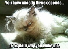 Me everytime someone wakes me up