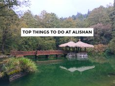 Are you looking to go to Alishan in Taiwan? Here are the top must dos & things to do in Alishan so you don't miss out on any of it! First, the Forest Train