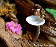 Magical Fairy Garden Furniture : Shell Sink : www.theMagicOnions.com