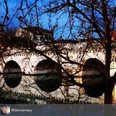 #myrimini #raccontarimini @comunerimini #vivorimini #rimini #vivoemiliaromagna #ponteditiberio #albero #rami #tree #nature #instanature #photoitaly #italy #italianphoto #mirror #ponte #archi #regram di @damamary