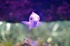 Un pequeño pez  no muy feliz :0