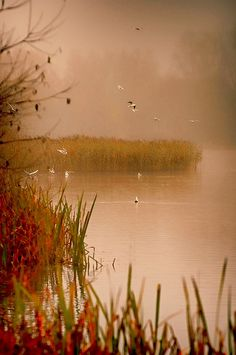 mist on the lake by Angel Taylor .Hello friends on Flickr.