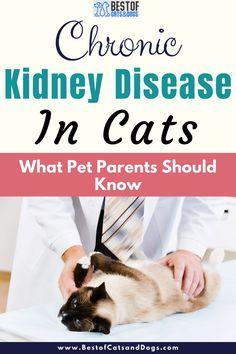 A Large Number Of Medical Problems Can Cause Kidney Disease In Cats. The Most Common Causes Are The Resulting Damages From Toxins, Infectious Diseases And Diseases That Impair Kidney Blood Flow. Common Toxins To Be Aware Of Are... Read More Here! #CatHealth #CatTips #KidneyDisease #CatKidneyProblems #ChronicKidneyDisease