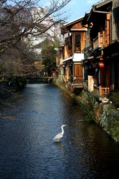 Kyoto... Oh how I miss you. I /will/ get back there someday