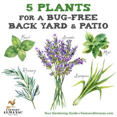 pest-controlling plants that repel and confuse insects using a distinctive, strong scent. Just plant these around your outdoor spaces for bug-free summer! Backyard Ideas For Small Yards, Sloped Backyard, Backyard Landscaping, Insect Repellent Plants, Mosquito Repelling Plants, Anti Mosquito Plants, Organic Gardening, Gardening Tips, Gardening Magazines