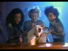 Dale may budweiser ad campaign budweiser ad campaign spuds mackenzie in classic budweiser ad 1988 english bull terriersbud lightad campaignscommercialadvertising campaign mozeypictures Images