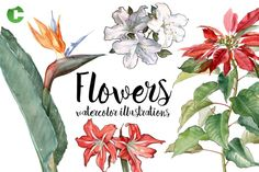 Flowers - Watercolor Illustrations Graphics **Flowers - Watercolor Illustrations**- 20 hand painted illustrations - Watercolor technique- Di by Colatudo Store Hand Illustration, Watercolor Illustration, Illustrations, Watercolor And Ink, Watercolor Flowers, Old Wood Texture, Wood Background, Abstract Photos, Watercolor Techniques