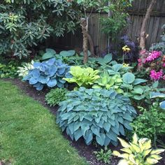 Front Yard Garden Design Black GoldTop 10 Shade Garden Plants for the Pacific Northwest - It's hard for me to list a top 10 list for any category of plants, but here I try. Top 10 Shade Garden Plants for the Pacific Northwest Shade Garden Plants, Garden Shrubs, Diy Garden, Small Garden Planting Ideas, Plants For Shade, Simple Garden Ideas, Cheap Garden Ideas, Shaded Garden, Ferns Garden