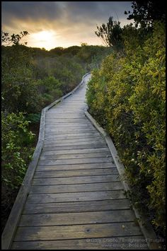 Wooden Boardwalk path walking trail through Elfin Forest Natural Area at sunset, Los Osos, California - ID# MRO-2121