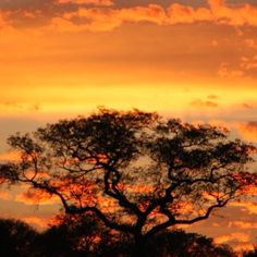 Kruger Park, South Africa Next Holiday, African Safari, Dream Vacations, Travel Around, Wonders Of The World, South Africa, Scenery, Places To Visit, Passport Stamps
