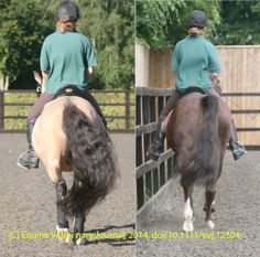 SADDLE SLIP AND RIDER/HORSE BACK PAIN By: NICOLA KERBYSON, Equine Veterinary Journal