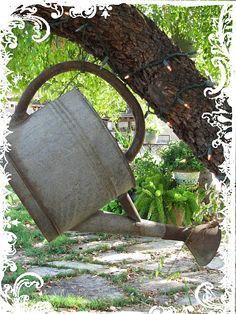 watering can in tree