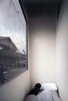 """ Kazuyo Sejima | house in a plum grove  """