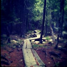 We loved the 3 mile hiking trail around Jordan Pond, Maine