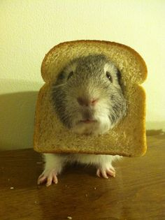 In-bread pig!