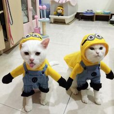Amazing Minions Cat Costume!!  Available in 5 different sizes with FREE worldwide shipping. Looks incredibly cute on cats and small dogs. The purrrfect gift for your furry furriend!  Check it out here => http://www.pawsomecouture.com/products/amazing-minions-cat-costume  Use code PAWSOME for 10% off :)