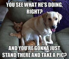 Bahaha my dogs do this all the time to the cat and each other