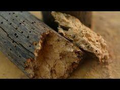 11 Ideas De Tratamiento De Madera Madera De Madera Termitas