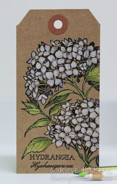 kraft tag with hydrangeas...luv the look of coloring on kraft...