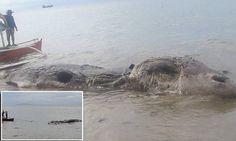 Mysterious dead beast washes up on an island in the Philippines..Загадочное мертвое животное выбросило на остров на Филиппинах ....Странное существо нашли на мелководье у г. Маасин-Сити... и не могли опознать, потому что он уже разложился .. Сообщается, что 32 футов-длинное существо пришлось отбуксировать в море из-за запаха...