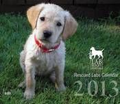 Support the Lab Rescue of LRCP by purchasing calendars, t-shirts and much more. Proceeds go to pay veterinary bills and other costs.  Lab Rescue took in 1,000 Labs in the Maryland/Virginia and Washington, D.C. area in 2012!