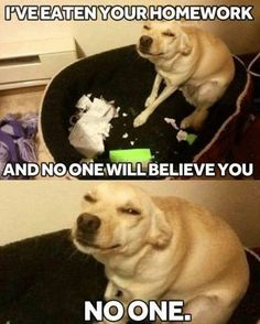 Funny and engaging moments in life that makes you go lol so true. Come have a laugh or submit your lol so true moment.Read This Top 24 lol so True Hilarious Memes Top 24 lol so True Hilarious Memes… Funny Animal Jokes, Funny Dog Memes, Cute Funny Animals, Funny Relatable Memes, Funny Animal Pictures, Funny Quotes, Funny Puppies, True Memes, Memes Humor