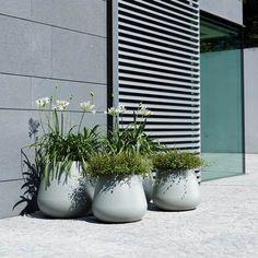 Back Garden Landscaping, Landscaping Plants, Back Gardens, Potted Plants, Garden Inspiration, Container Gardening, Flower Pots, Outdoor Living, Planter Pots