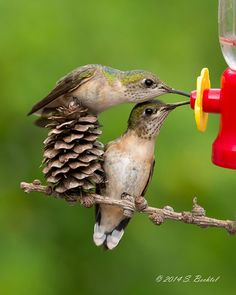 I have yet to see this happen! Hummers are fairly territorial and don't tend to share :)