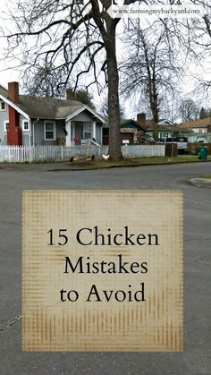 15 Chicken Keeping Mistakes to Avoid from Farming My Backyard #BackyardChickens