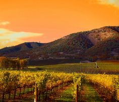 2012 and 2013 'best vintages in Napa's history'