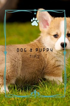 Dog Chewing Training Your Dog Well Is A Worthwhile Investment More Info Could Be Found At The Image Url Dogsstuff Puppy Dogowner Dogs Stuff Train