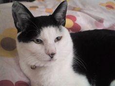 帯広Wishの猫ちゃんです #猫 #里親募集