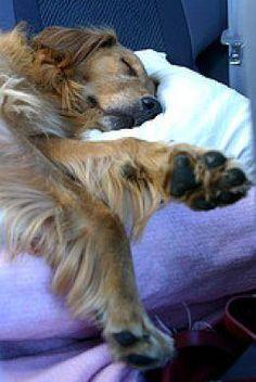 """wake me up for dinner...."""
