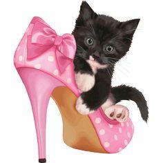 Chaton dans un soulier,trop mignon