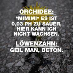 ORCHIDEE: *MIMIMI* ES IST 0,03 PH ZU SAUER, HIER KANN ICH NICHT WACHSEN. LÖWENZAHN: GEIL MAN, BETON. - VISUAL STATEMENTS®