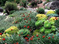 rock garden ideas | creeping phlox, growing plants and shrub