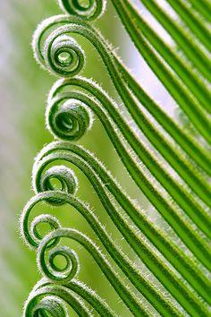green curls